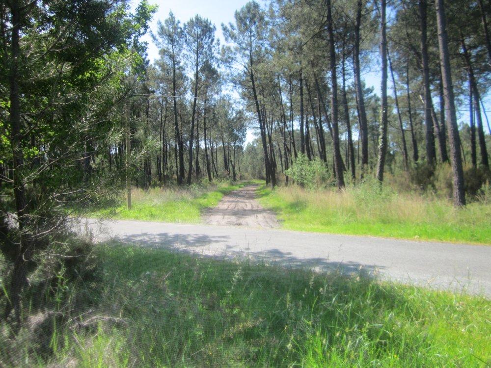 Aire camping-car à Barp (33114) - Photo 1